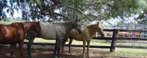 Neue Pferde