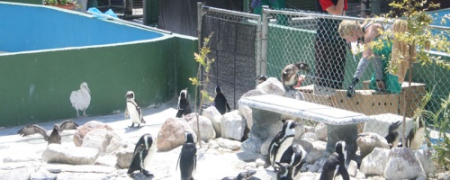 Pinguin-Anlage