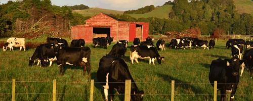 Farm in Neuseeland