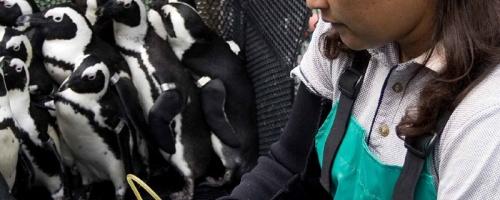Pinguine reinigen
