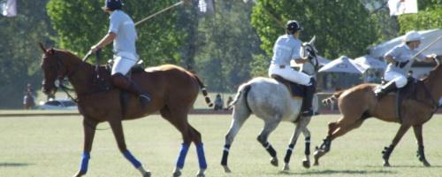 Polo-Event am Wochenende
